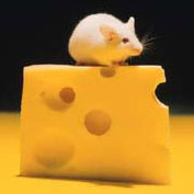 mouse_on_cheese.jpg